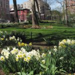 Spring in Harlem, Asia Society, SH and Facebook